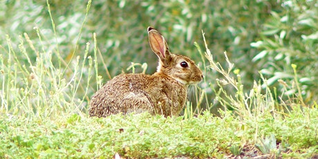 Pest Rabbit Control Workshop tickets