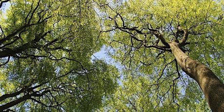 Meet a Tree @ Whitnash Brook tickets