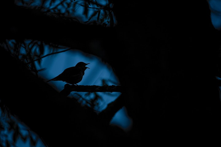 Music with Nightingales: Hosted by Sam Lee image