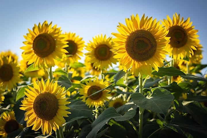 Sunbeams image