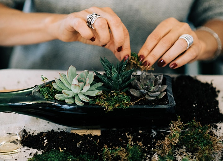 SOLD OUT - In-Person Wine Bottle Succulent Workshop at SpringGate Winery image