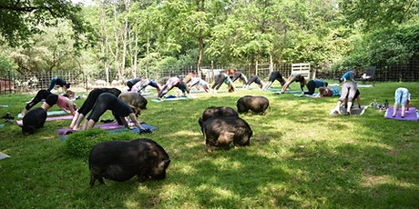 Mother's Day Yoga with Pigs led by Kerrie tickets