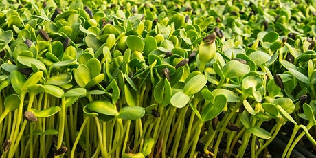 Virtual Class: Grow Your Own Microgreens tickets