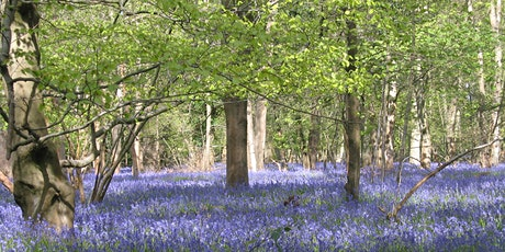 Bluebells for Bluebells tickets