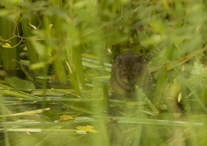Beaver Conservation and re-wilding experience image