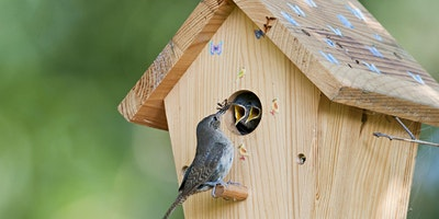 ConEd Family Day: Make Your Own Birdhouse in the P