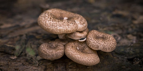 Foraging Fungi:  Lessons on Safety & ID with Forage Culture [ONLINE] tickets