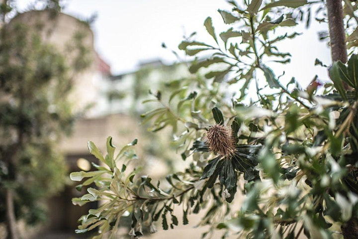 Panel Discussion: Growth and Respect - Eastern Suburbs Banksia Scrub image