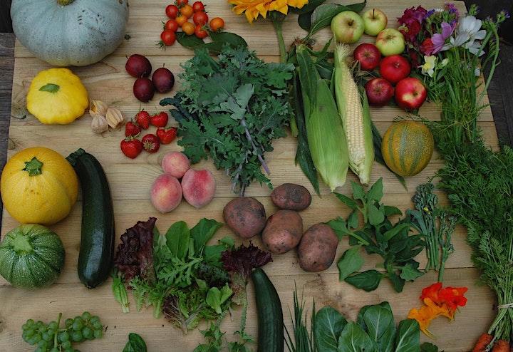 Circular economy in organic vegetable growing image