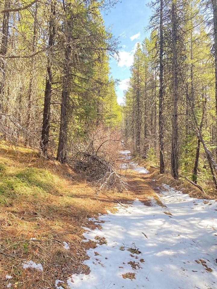 Marble Mountain- Intermediate Guided hike (NW of Sundre) image