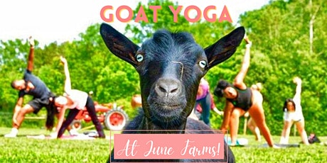 Goat Yoga, Pizza & Brew Tuesday at June Farms! tickets