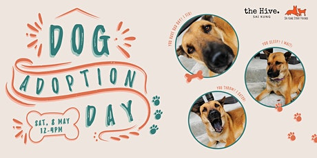 Sai Kung Stray Friends Dog Adoption Day tickets