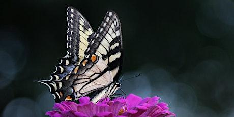 Pollinator Gardens tickets