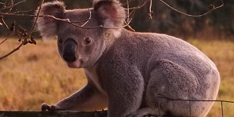 Koala-TY Information Session tickets