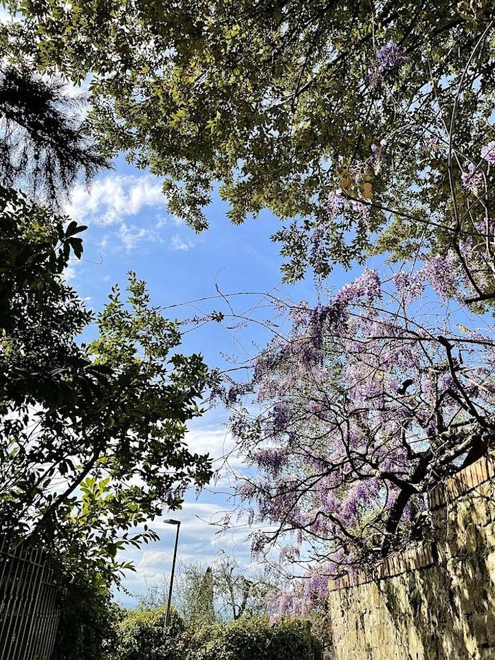 Immagine Trekking Urbano sulla collina di Bellosguardo