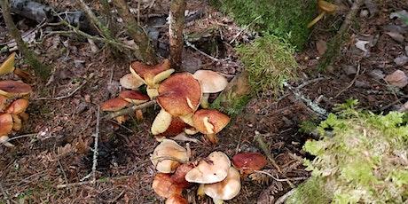 Initiation `a l'identification et à la cueillette des champignons billets