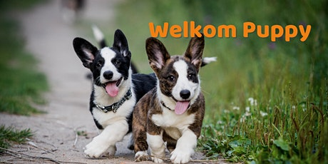 Welkom Puppy: Puppy Coaching tickets