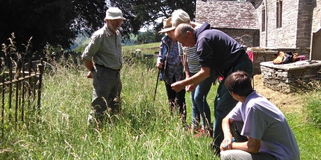 Learn to Identify & Record Wildflowers and Plants - Clifford tickets