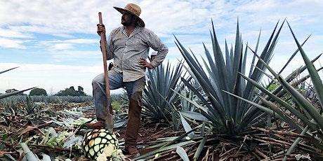 Ilegal Mezcal & Tapatio Tequila Virtual Tasting tickets