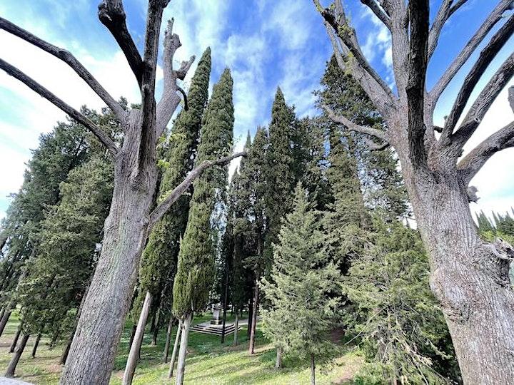 Immagine Trekking Urbano sulla Collina di San Miniato e Arcetri