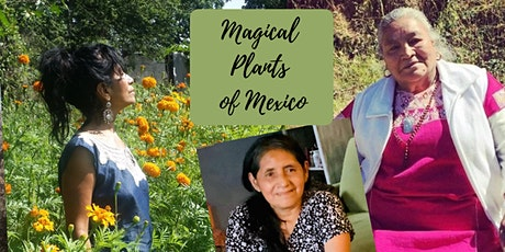 Magical Plants of Mexico - Spanish, translated, online & recorded tickets