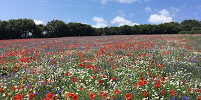 LISW Webinar – Establishing and Maintaining Wildflowers Successfully