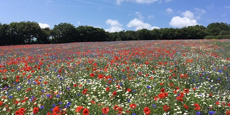 LISW Webinar - Establishing and Maintaining Wildflowers Successfully tickets