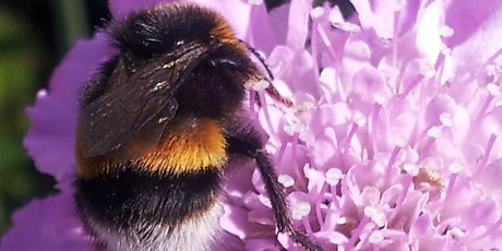 Pollinator Planting - Sponsored by Galway County Council tickets