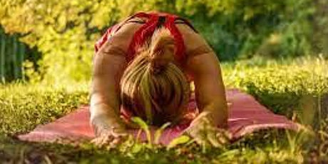 Unwind in the Forest: Slow Flow Yoga & Forest Therapy Walk tickets