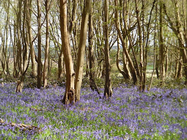 Virtual Tour - Hertfordshire - Countryside on London's Border image