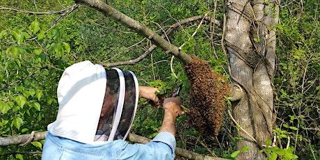 Caldwell County Beekeeper's Association - June Zoom Meeting tickets