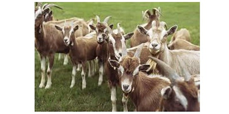 2021 Reproductive Management and Artificial Insemination Workshop in Goats tickets