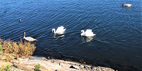 VIRTUAL Preschool Summer Series - Animals Around the Reservoir tickets