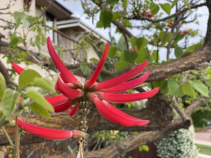 Blossoms, Bridges and Mansions of Bankers Hill - FREE LIVE VIRTUAL TOUR image