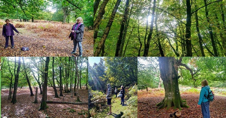 Unwind in the Forest: Traditional Forest Therapy Walk image