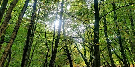 Forest Bathing Immersion with complimentary Reiki tickets