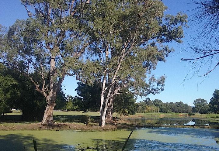 Gold Coast Regional Botanic Gardens Community Planting day image