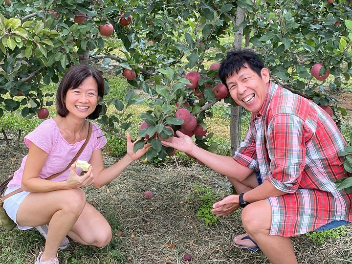Nicoletti Orchards - Guided Walking Tours Through The Pink Lady Apple Trees image