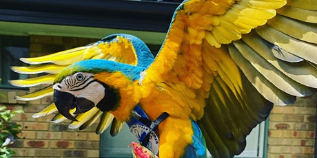 All day play centre pass & life drawing with Smee the macaw tickets