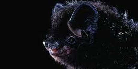 Oakland Public Library Summer Reading Presents NorCal Bats! tickets