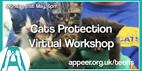 Teens Appeer Online Session - Cats Protection Virtual Workshop tickets