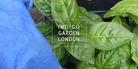 Fresh Leaf Indigo + Fresh Leaf Vat In-depth Workshop tickets