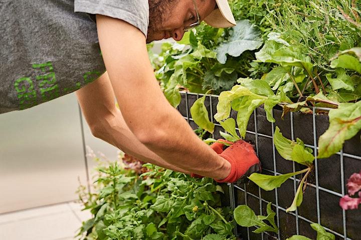Image pour Découverte de notre ferme urbaine !
