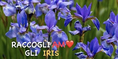 Raccogli-AMO gli iris biglietti