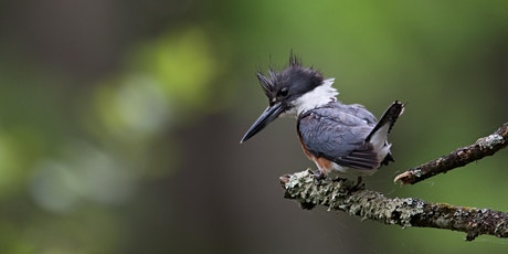 Birding Walk at The Highlands tickets