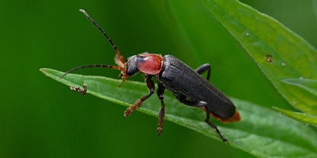 It's a Buggy World:  Identifying Insects in the Landscape tickets