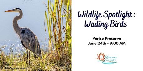 Wildlife Spotlight: Wading Birds tickets