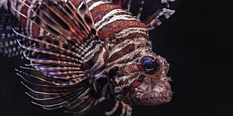 Invasive Species Series, Part 5: Florida's Invasive Fish (webinar) tickets
