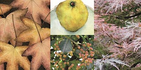 'Colours of Autumn' Watercolour Workshop tickets