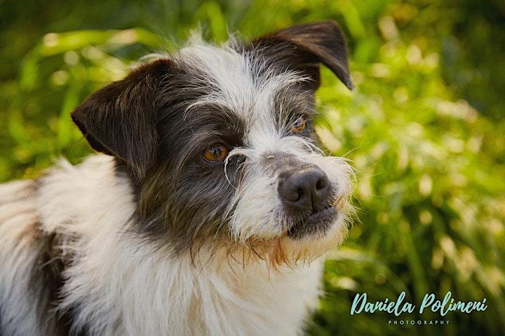 Immagine Giornata di Foto ritratti con il tuo cane per aiutare ENPA